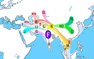 y chromosome haplogroup f genetics urantia