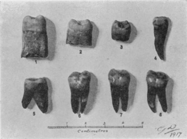 Photograph of the teeth found in 1917 suggesting evidence of Paleolithic humans in Malta. Giuseppe Despott - Sir Arthur Keith